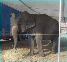 Képkivágás elefánt