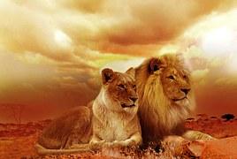 lion-577104__180