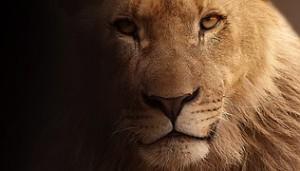 lion-617365__180