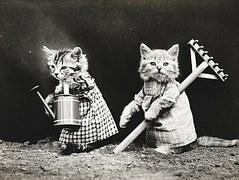 aranyos cica kép