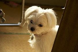kutyuska kép